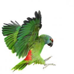 vétérinaire oiseau Charleroi