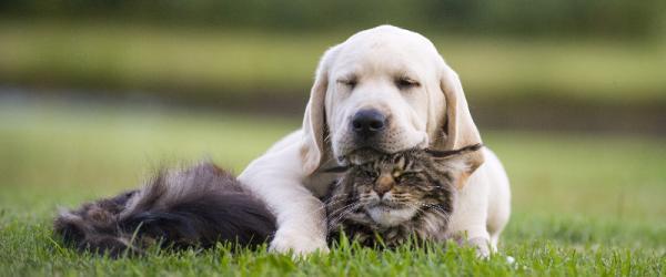vétérinaire chien Charleroi